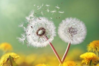 El asma se puede accionar por los alergénicos del polvo del molde, la piel del cucaracha, animal, o hierba, árbol, y los pollens de la flor