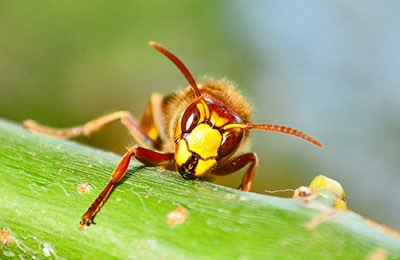 The stings and bites most likely to cause a serious reaction or anaphylaxis are bees, wasps, yellow jackets, hornets, and fire ants.